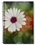 White Daisy In A Sunset Spiral Notebook
