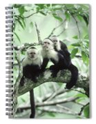 White-faced Capuchins Spiral Notebook