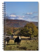 White Faced Cattle In Autumn Spiral Notebook