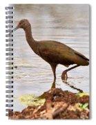 White-faced Ibis Spiral Notebook