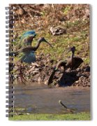 White-faced Ibis Mating Behavior In Early Spring Spiral Notebook