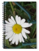 White Flower On The Fence Spiral Notebook