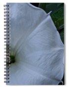 White Glory Spiral Notebook