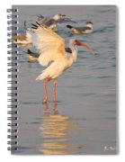 White Ibis With Wings Raised Spiral Notebook