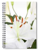 White Lilies And Background Spiral Notebook