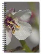 White Mullein - Verbascum Lychnitis Wildflower Spiral Notebook