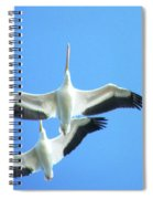 White Pelicans In Flight Spiral Notebook