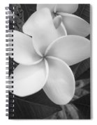 White Plumeria Bw Spiral Notebook