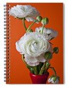 White Ranunculus Close Up In Red Vase Spiral Notebook