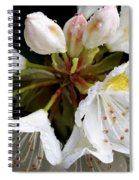 White Rhododendron Blooms  Spiral Notebook