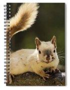 White Squirrel Spiral Notebook