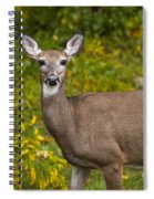 White Tail Early Autumn Spiral Notebook