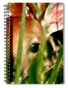 White Tailed Deer Fawn Hiding In Grass Spiral Notebook