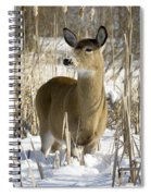 White-tailed Deer In A Snow-covered Spiral Notebook