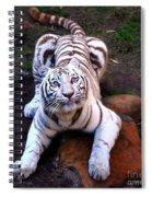 White Tiger 2 Spiral Notebook