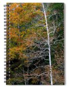 White Tree Fall Colors  Spiral Notebook