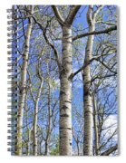 White Trees Against A Blue Sky Spiral Notebook