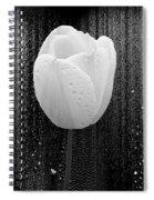 White Tulip On Black Spiral Notebook