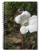 Small White Morning Glory Spiral Notebook