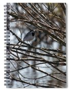 White Wagtail Spiral Notebook