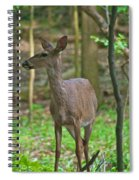 Whitetail 7338 Spiral Notebook