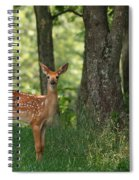 Whitetail Deer Fawn Spiral Notebook