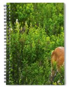 Whitetail Deer In Meadow, Killarney Spiral Notebook