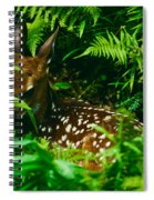 Whitetail Fawn And Ferns Spiral Notebook