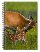 Whitetail Fawn Nursing Spiral Notebook