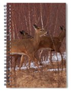 Whitetails On The Move Spiral Notebook