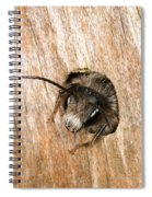 Who Goes There Spiral Notebook