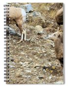 Who's On First? Spiral Notebook