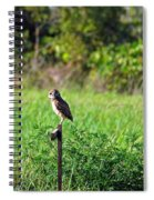 Wide Eyed Owl Spiral Notebook