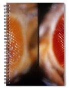 Wild & White-eosin Eyes In Drosophila Spiral Notebook
