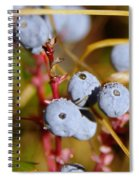Wild Blue Berries With Water Drops  Spiral Notebook