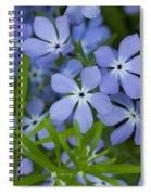 Wild Blue Phlox Flower 1 A Spiral Notebook