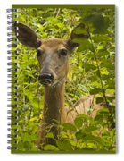 Wild Doe Spiral Notebook