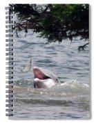 Wild Dolphin Feeding Spiral Notebook