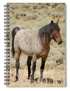 Wild Horses Wyoming - The Mare Spiral Notebook