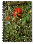 Wild Paint Brush Spiral Notebook