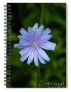 Wild Star Spiral Notebook