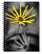 Wild Swamp Daisy Spiral Notebook