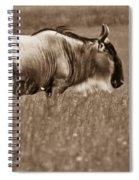 Wildeeest In Stance Spiral Notebook
