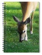 Wildlife Beauty Spiral Notebook