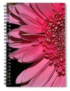 Wildly Pink Mum Spiral Notebook