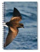 Wilson's Storm-petrel Spiral Notebook
