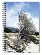 Windswept Tree Spiral Notebook