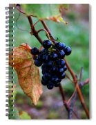 Wine In Time Spiral Notebook