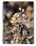 Winter Blossom Fairy Spiral Notebook