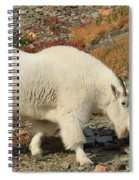 Winter Coat Spiral Notebook